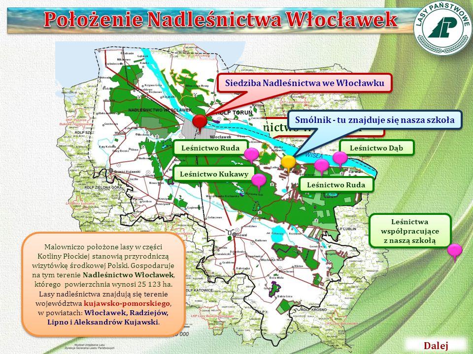 Nadleśnictwo Włocławek Siedziba Nadleśnictwa we Włocławku Smólnik - tu znajduje się nasza szkoła Leśnictwo Dąb Leśnictwo Ruda Leśnictwo Kukawy Leśnict