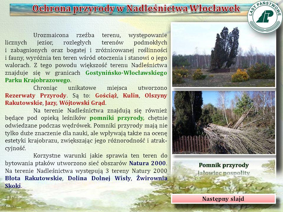 Nadleśnictwo Włocławek jest organizatorem wielu projektów edukacyjnych oraz rekreacyjnych skierowanych przede wszystkim do dzieci i młodzieży.