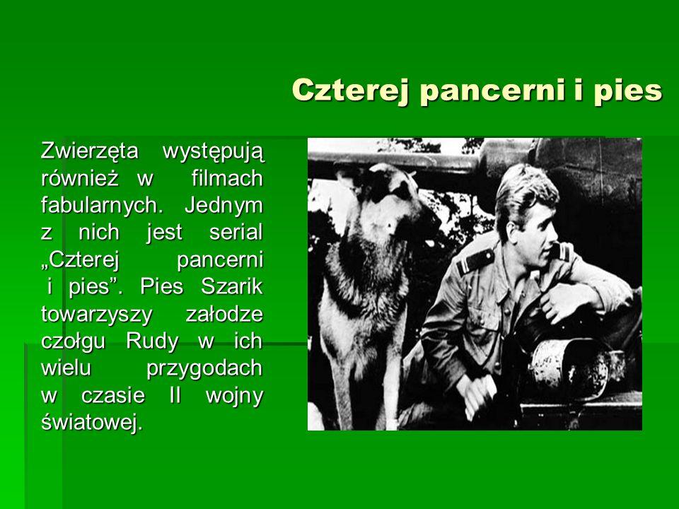 """Czterej pancerni i pies Czterej pancerni i pies Zwierzęta występują również w filmach fabularnych. Jednym z nich jest serial """"Czterej pancerni i pies"""""""