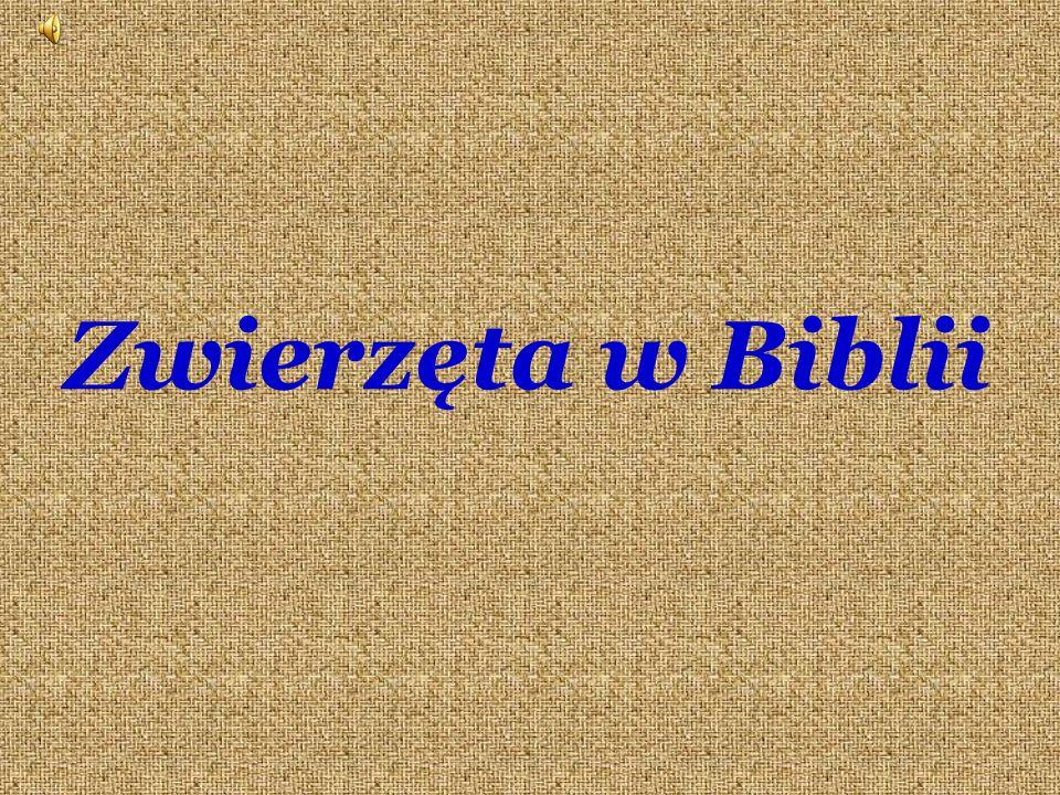 Zwierzęta w Biblii