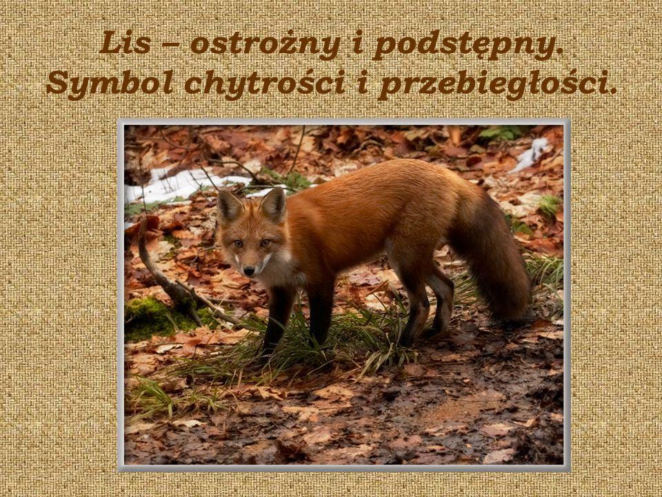 Lis – ostrożny i podstępny. Symbol chytrości i przebiegłości.
