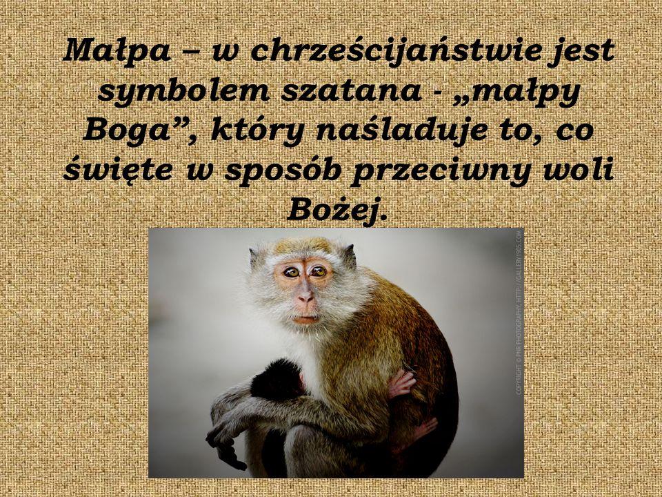 """Małpa – w chrześcijaństwie jest symbolem szatana - """"małpy Boga , który naśladuje to, co święte w sposób przeciwny woli Bożej."""