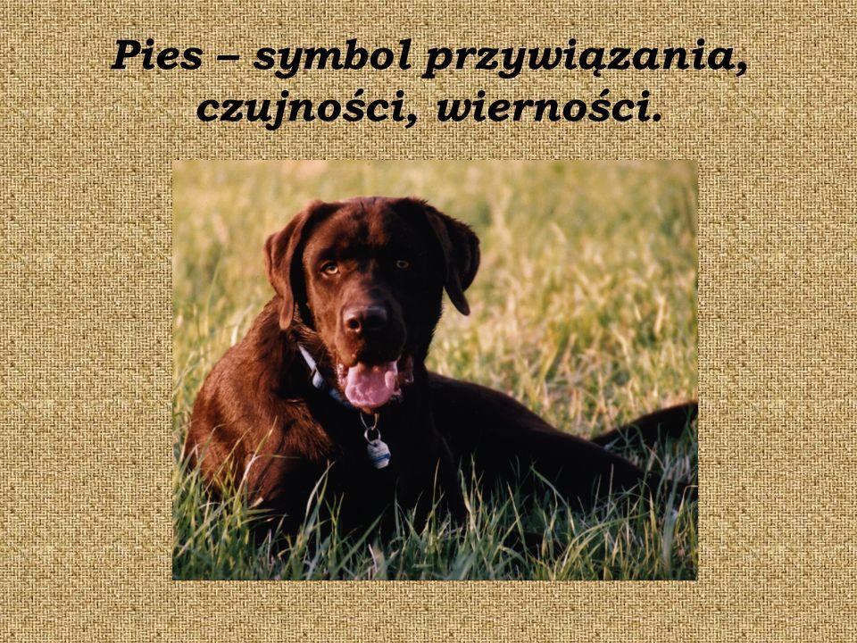 Pies – symbol przywiązania, czujności, wierności.