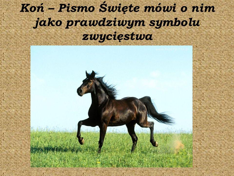 Koń – Pismo Święte mówi o nim jako prawdziwym symbolu zwycięstwa