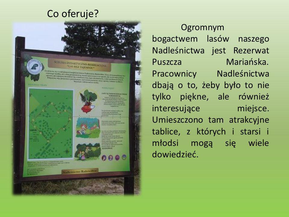 Co oferuje. Ogromnym bogactwem lasów naszego Nadleśnictwa jest Rezerwat Puszcza Mariańska.
