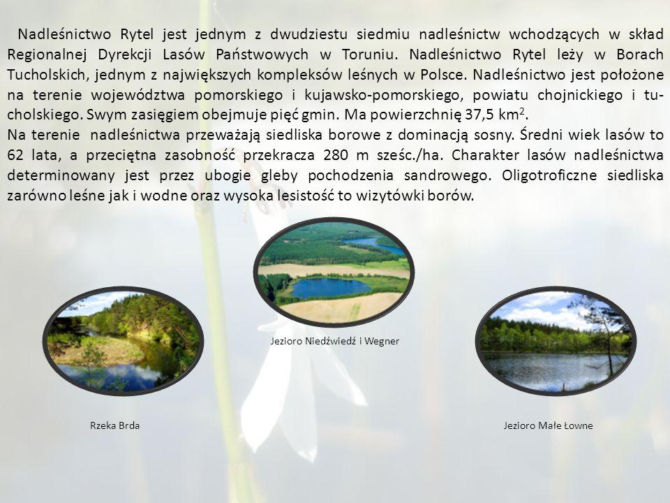 Nadleśnictwo Rytel jest jednym z dwudziestu siedmiu nadleśnictw wchodzących w skład Regionalnej Dyrekcji Lasów Państwowych w Toruniu.