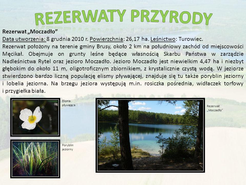 """Rezerwat """"Moczadło Data utworzenia: 8 grudnia 2010 r."""