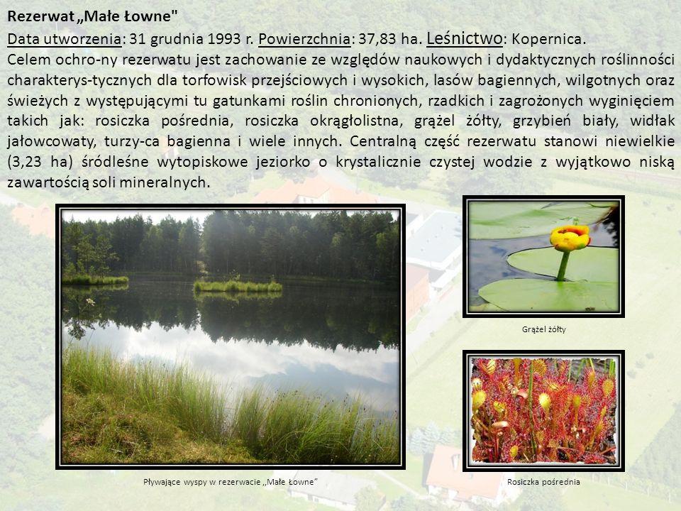 """Rezerwat """"Małe Łowne Data utworzenia: 31 grudnia 1993 r."""