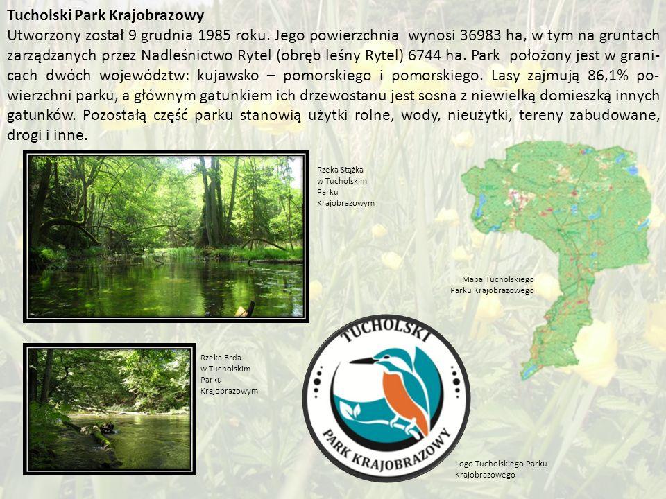 Tucholski Park Krajobrazowy Utworzony został 9 grudnia 1985 roku.