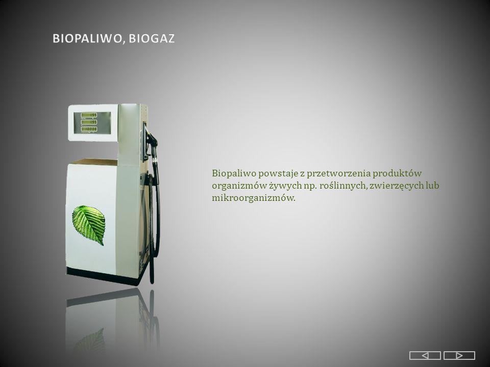 Biopaliwo powstaje z przetworzenia produktów organizmów żywych np.