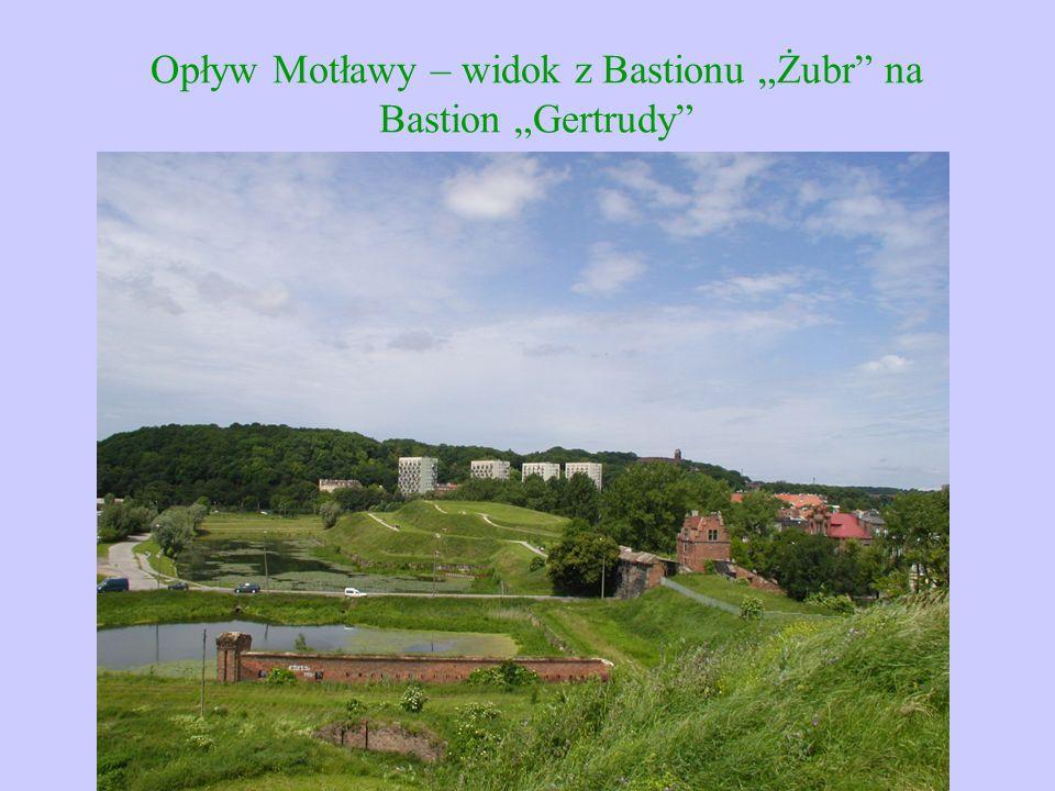"""Opływ Motławy – widok z Bastionu """"Żubr"""" na Bastion """"Gertrudy"""""""