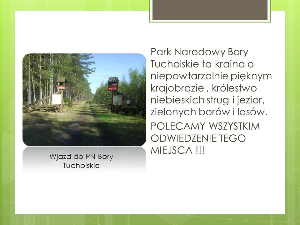 Park Narodowy Bory Tucholskie to kraina o niepowtarzalnie pięknym krajobrazie, królestwo niebieskich strug i jezior, zielonych borów i lasów. POLECAMY