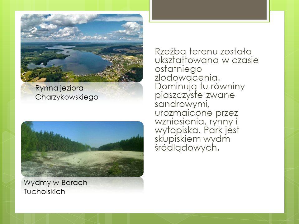 W parku występuje wiele gatunków zwierząt m.in.