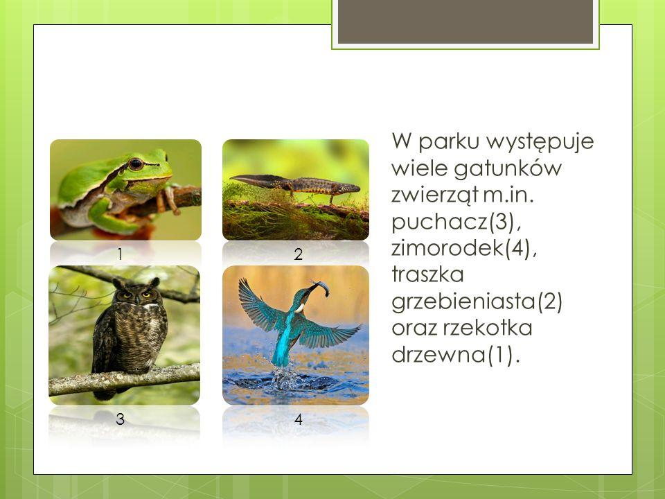 W parku występuje wiele gatunków zwierząt m.in. puchacz(3), zimorodek(4), traszka grzebieniasta(2) oraz rzekotka drzewna(1). 12 34