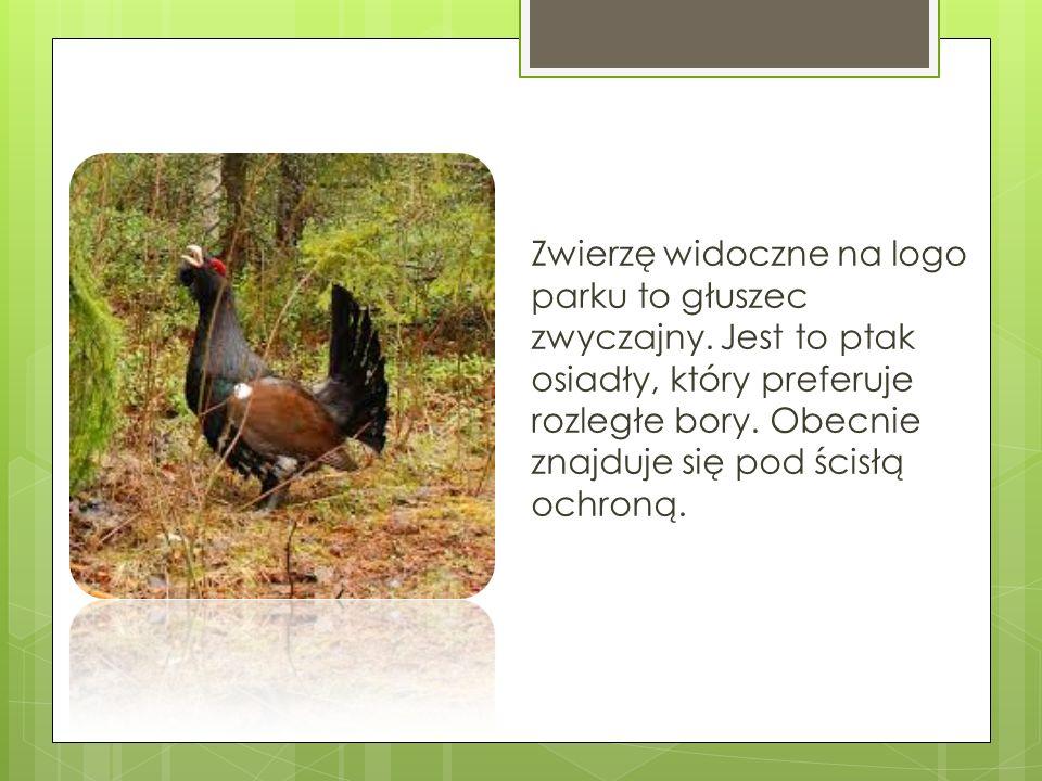 Flora Borów Tucholskich należy do flor średnio- bogatych.
