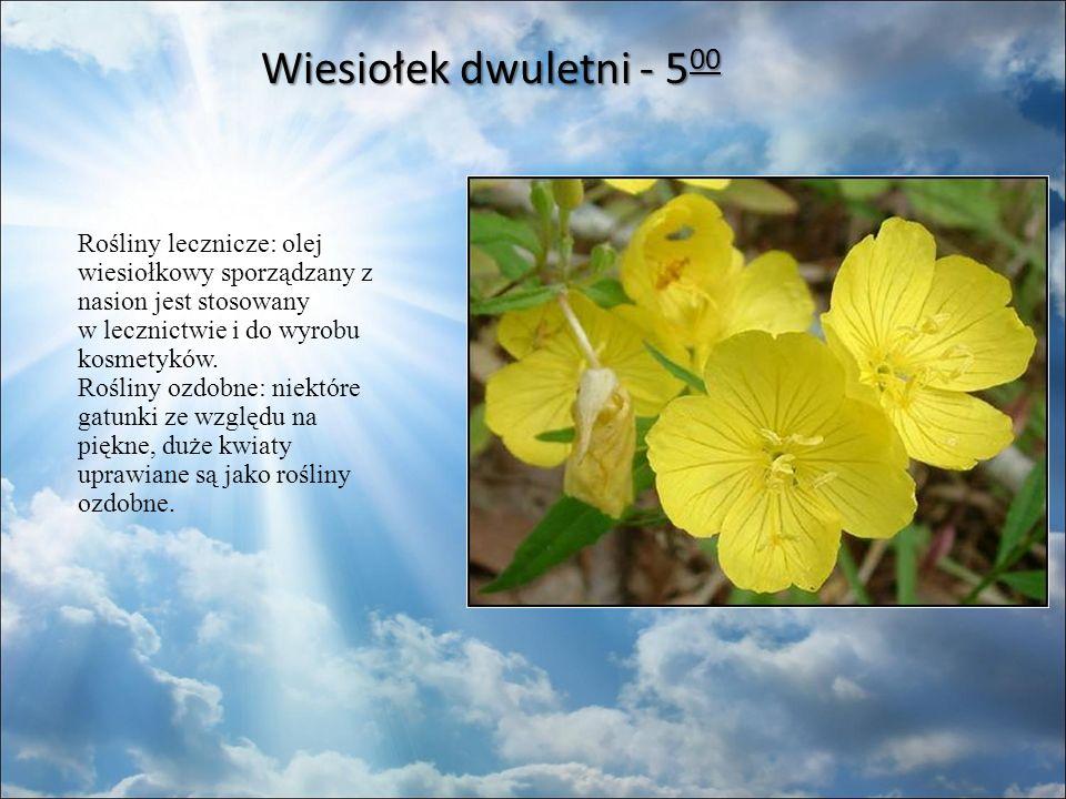 Wiesiołek dwuletni - 5 00 Rośliny lecznicze: olej wiesiołkowy sporządzany z nasion jest stosowany w lecznictwie i do wyrobu kosmetyków.