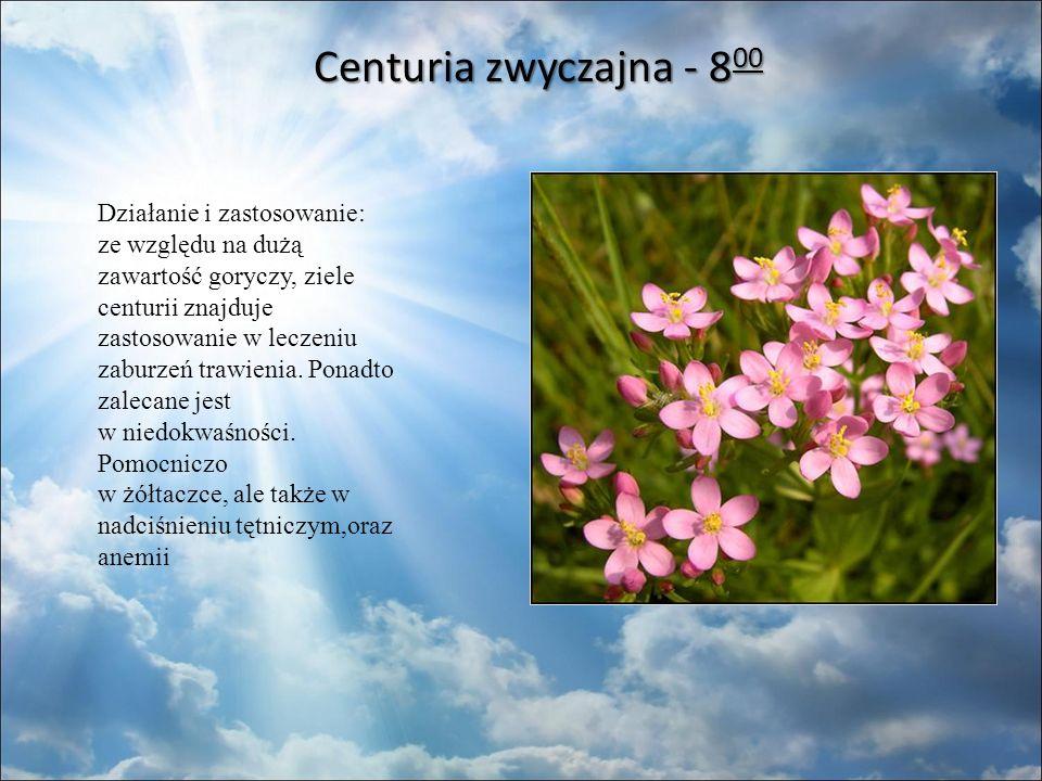 Centuria zwyczajna - 8 00 Centuria zwyczajna - 8 00 Działanie i zastosowanie: ze względu na dużą zawartość goryczy, ziele centurii znajduje zastosowanie w leczeniu zaburzeń trawienia.