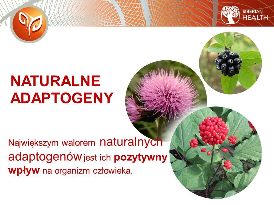 Największym walorem naturalnych adaptogenów jest ich pozytywny wpływ na organizm człowieka.