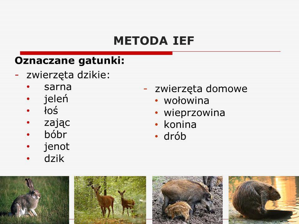 METODA IEF Oznaczane gatunki: -zwierzęta dzikie: sarna jeleń łoś zając bóbr jenot dzik -zwierzęta domowe wołowina wieprzowina konina drób