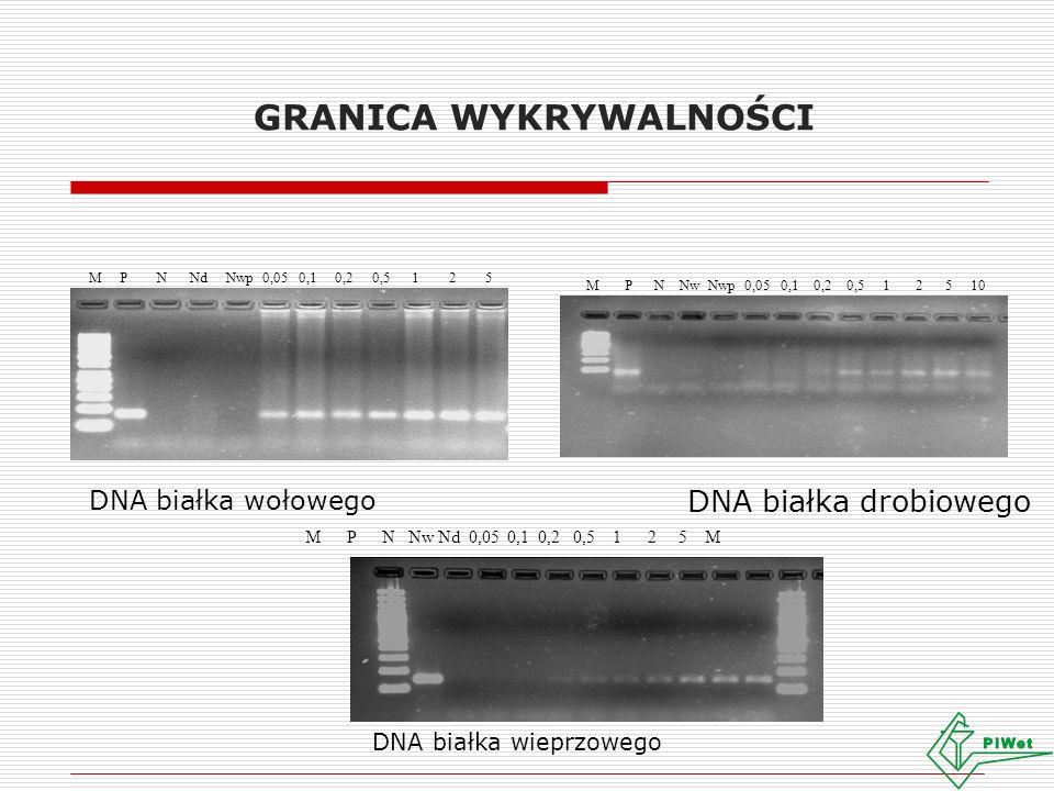 GRANICA WYKRYWALNOŚCI DNA białka wołowego M P N Nd Nwp 0,05 0,1 0,2 0,5 1 2 5 M P N Nw Nwp 0,05 0,1 0,2 0,5 1 2 5 10 DNA białka drobiowego M P N Nw Nd 0,05 0,1 0,2 0,5 1 2 5 M DNA białka wieprzowego