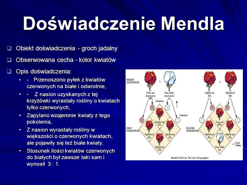 Pierwsze prawo Mendla W gametach występuje zawsze tylko jeden allel danej cechy