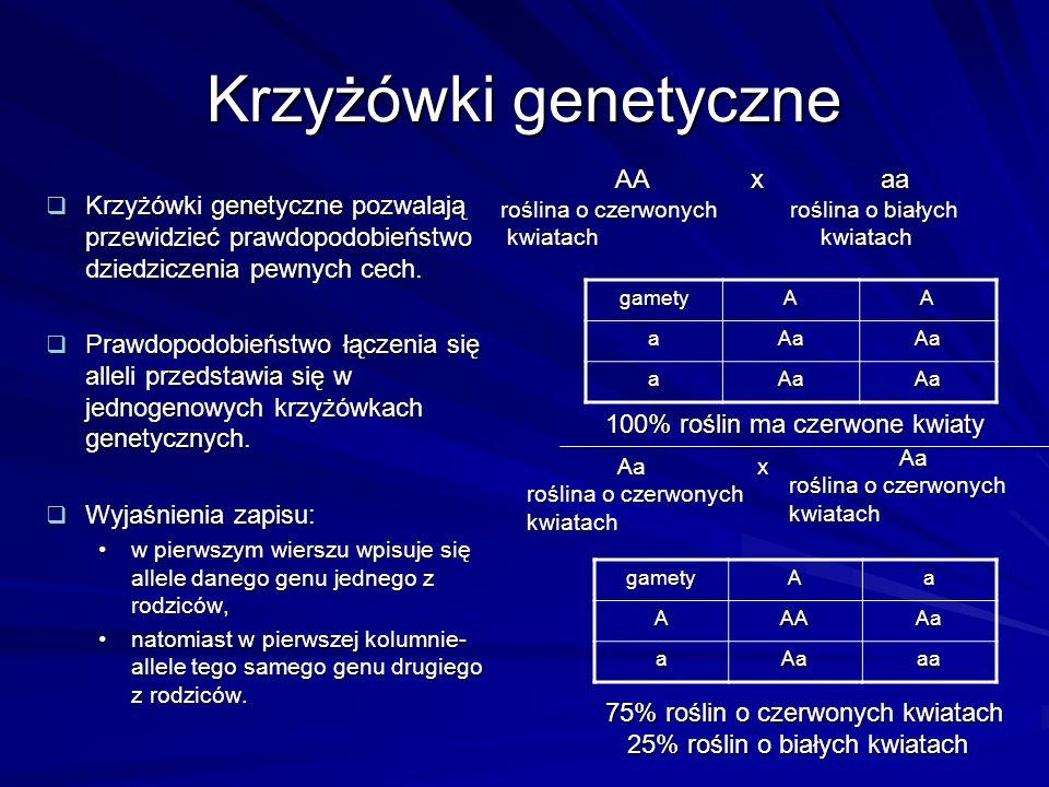 Krzyżówki genetyczne  Krzyżówki genetyczne pozwalają przewidzieć prawdopodobieństwo dziedziczenia pewnych cech.  Prawdopodobieństwo łączenia się all
