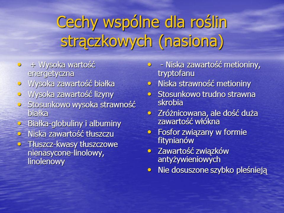 Groch (Pisum sativum ssp.