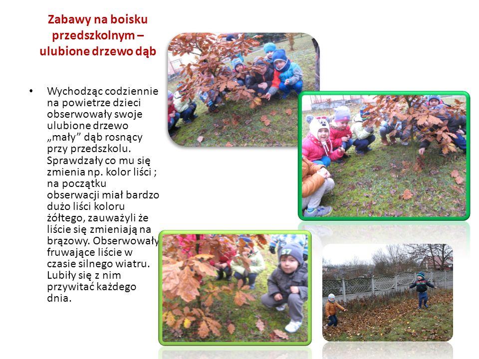 """Zabawy na boisku przedszkolnym – ulubione drzewo dąb Wychodząc codziennie na powietrze dzieci obserwowały swoje ulubione drzewo """"mały dąb rosnący przy przedszkolu."""