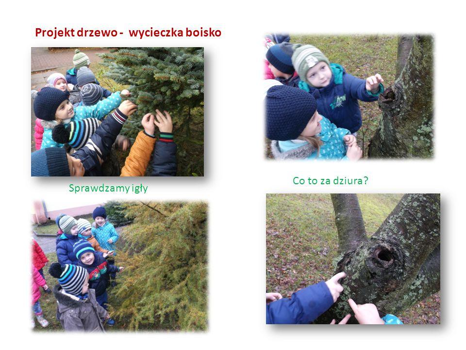 Projekt drzewo - wycieczka boisko Sprawdzamy igły Co to za dziura?
