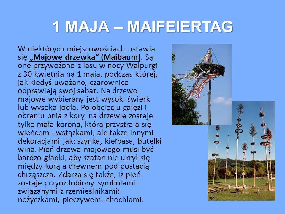 """1 MAJA – MAIFEIERTAG W niektórych miejscowościach ustawia się """"Majowe drzewka"""" (Maibaum). Są one przywożone z lasu w nocy Walpurgi z 30 kwietnia na 1"""
