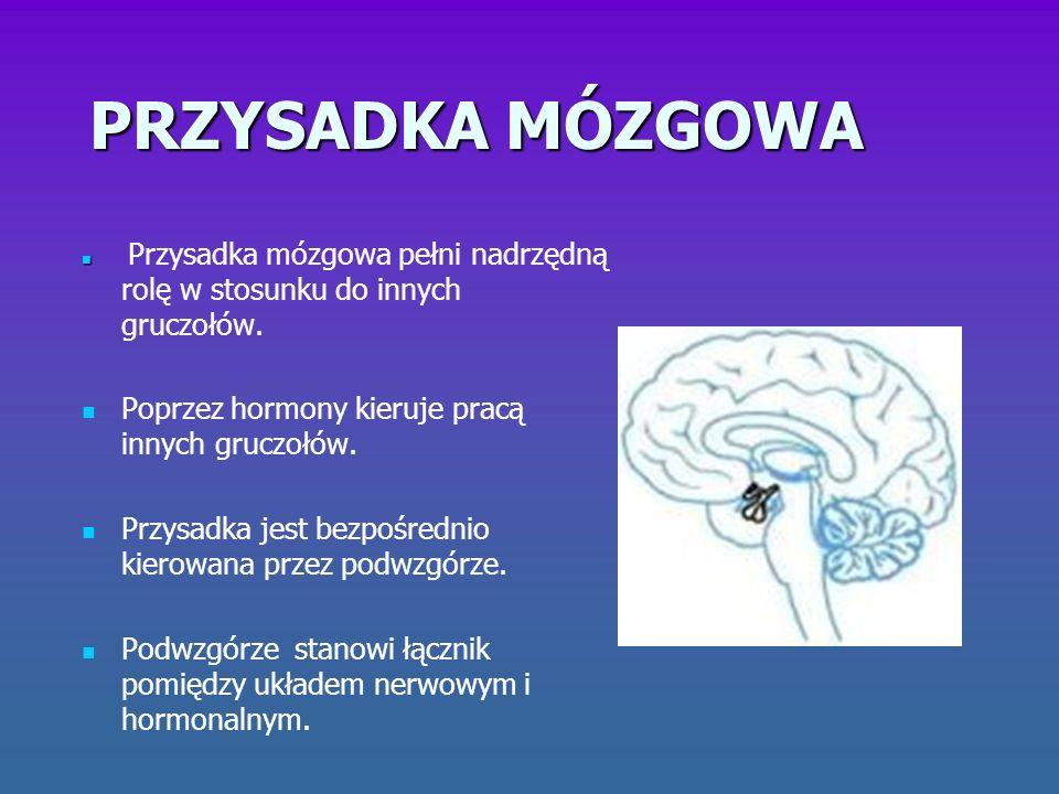 Hormony przysadki mózgowej Somatotropina – hormon wzrostu.