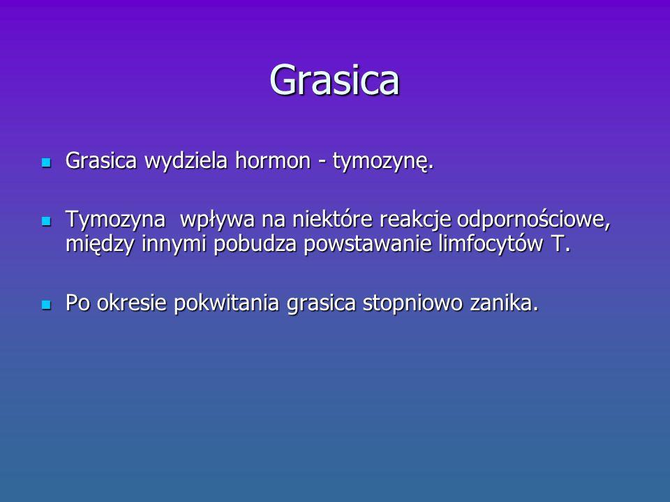Sprzężenie zwrotne Układ hormonalny jest bardzo często regulowany na zasadzie sprzężenia zwrotnego .