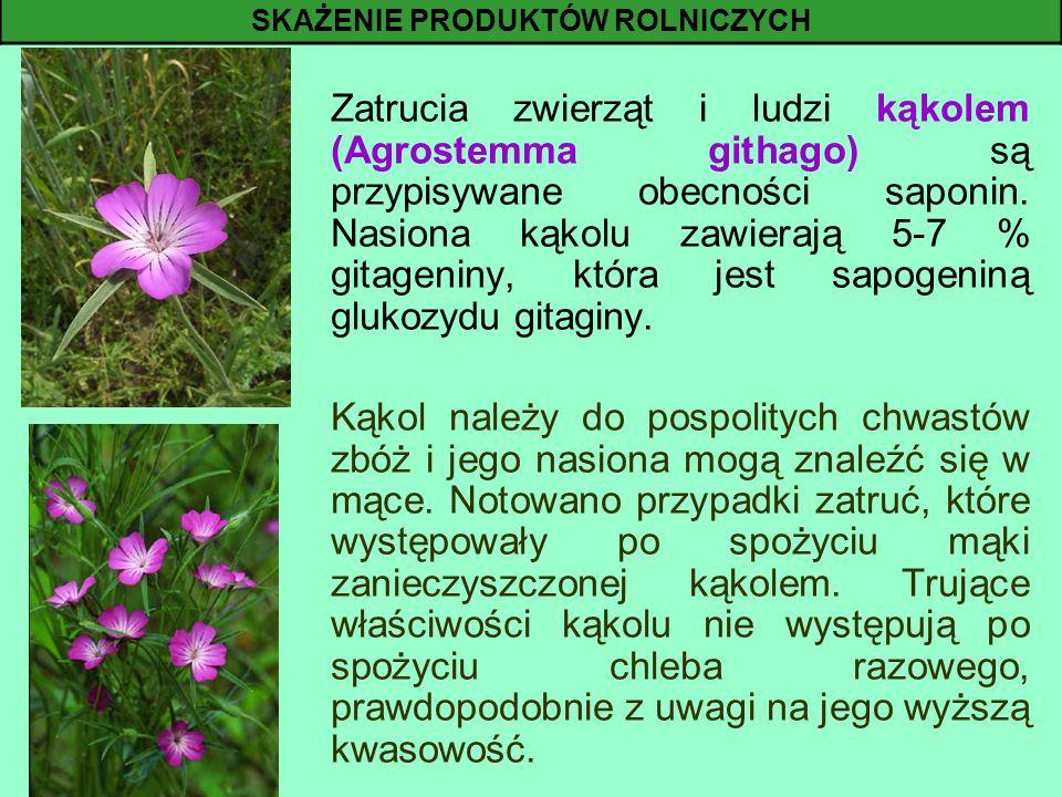 Zatrucia zwierząt i ludzi kąkolem (Agrostemma githago) są przypisywane obecności saponin. Nasiona kąkolu zawierają 5-7 % gitageniny, która jest sapoge