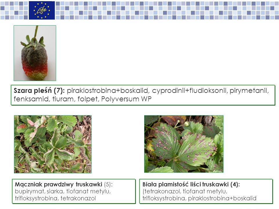 Mączniak prawdziwy truskawki (5): bupirymat, siarka, tiofanat metylu, trifloksystrobina, tetrakonazol Szara pleśń (7): piraklostrobina+boskalid, cyprodinil+fludioksonil, pirymetanil, fenksamid, tiuram, folpet, Polyversum WP Biała plamistość liści truskawki (4): (tetrakonazol, tiofanat metylu, trifloksystrobina, piraklostrobina+boskalid