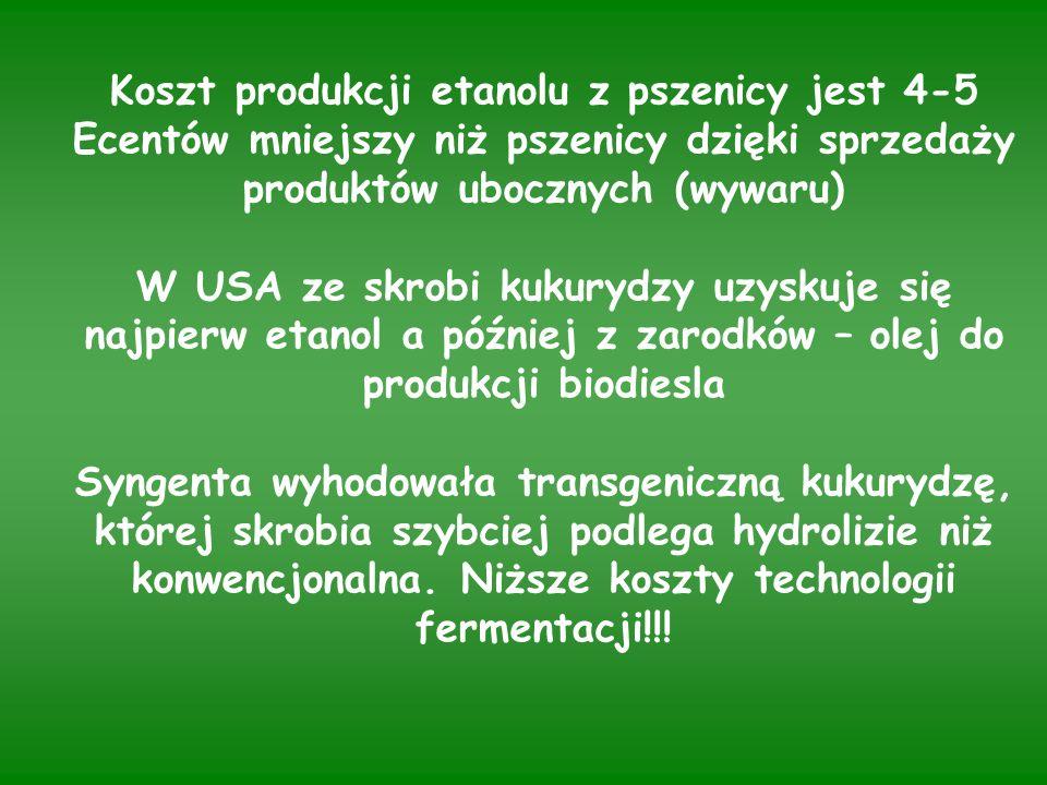 Koszt produkcji etanolu z pszenicy jest 4-5 Ecentów mniejszy niż pszenicy dzięki sprzedaży produktów ubocznych (wywaru) W USA ze skrobi kukurydzy uzyskuje się najpierw etanol a później z zarodków – olej do produkcji biodiesla Syngenta wyhodowała transgeniczną kukurydzę, której skrobia szybciej podlega hydrolizie niż konwencjonalna.