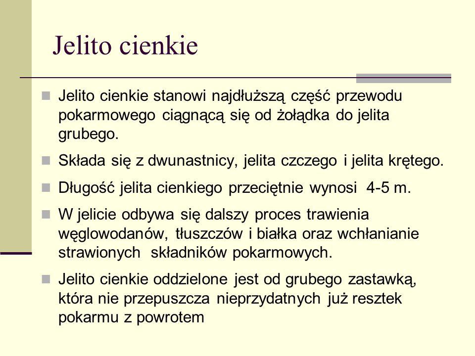 Jelito cienkie Jelito cienkie stanowi najdłuższą część przewodu pokarmowego ciągnącą się od żołądka do jelita grubego.