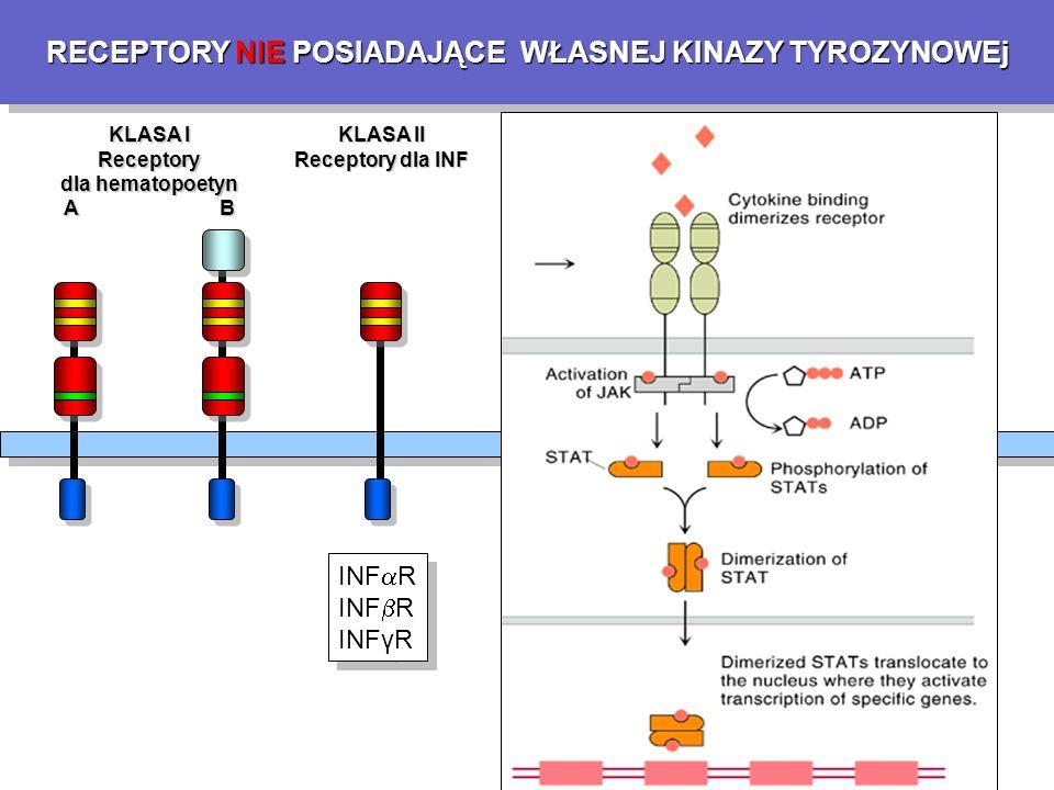 RECEPTORY NIE POSIADAJĄCE WŁASNEJ KINAZY TYROZYNOWEj KLASA I Receptory dla hematopoetyn A B KLASA II Receptory dla INF KLASA III Receptory dla TNF KLASA IV Receptory dla IL-1 INF  R INF  R INFγR INF  R INF  R INFγR p55 (TNFR1) p75 (TNFR2) FasR (APO-1) CD40 Ox40 CD27 CD30 p55 (TNFR1) p75 (TNFR2) FasR (APO-1) CD40 Ox40 CD27 CD30 IL-1R