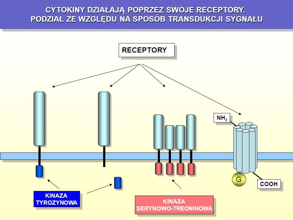 RECEPTORY POSIADAJĄCE KINAZĘ SERYNOWO-TREONINOWĄ TGF-  Aktywina Inhibina BMP TGF-  Aktywina Inhibina BMP TGF SYGNAŁ