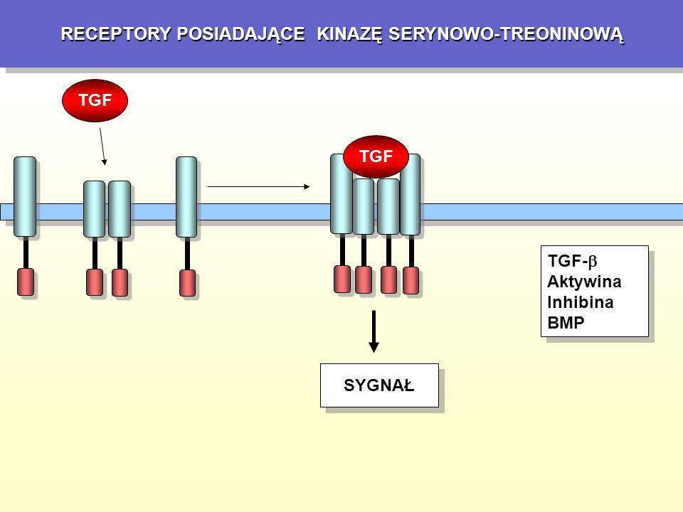 IL-2 oraz IL-3 IL-2 jest stosowana sama lub w skojarzeniu z IL-2 + LAK IL-2 + TIL – czerniak, rak nerki, rak płuc IL-2 + IFN – rak niedrobnokomórkowy płuc IL-2 + cytostatyki – z cisplatyną w czerniaku IL-3 przypomina swoim działaniem GM-CSF, ale ma szersze działanie.
