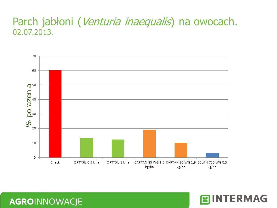 Parch jabłoni (Venturia inaequalis) na owocach. 02.07.2013. % porażenia