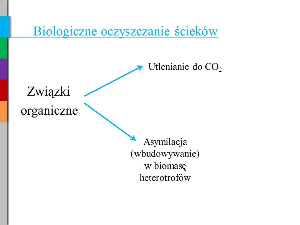 Biologiczne oczyszczanie ścieków Związki organiczne Utlenianie do CO 2 Asymilacja (wbudowywanie) w biomasę heterotrofów