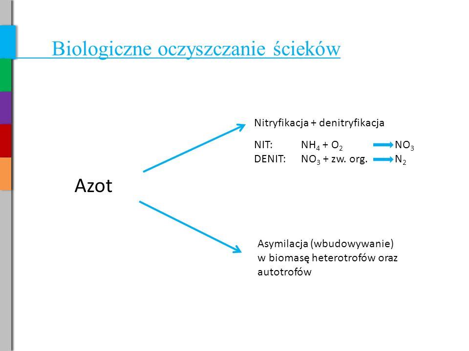 Biologiczne oczyszczanie ścieków Azot Nitryfikacja + denitryfikacja Asymilacja (wbudowywanie) w biomasę heterotrofów oraz autotrofów NIT:NH 4 + O 2 NO 3 DENIT:NO 3 + zw.