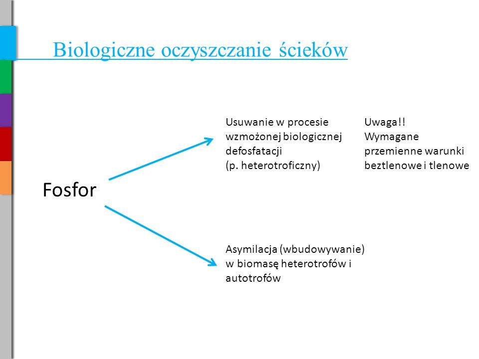 Biologiczne oczyszczanie ścieków Fosfor Usuwanie w procesie wzmożonej biologicznej defosfatacji (p.
