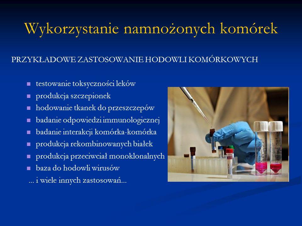Wykorzystanie namnożonych komórek PRZYKŁADOWE ZASTOSOWANIE HODOWLI KOMÓRKOWYCH testowanie toksyczności leków produkcja szczepionek hodowanie tkanek do