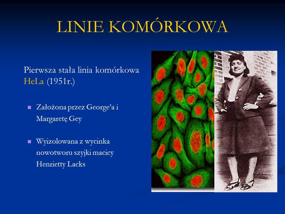 LINIE KOMÓRKOWA Pierwsza stała linia komórkowa HeLa (1951r.) Założona przez George'a i Margaretę Gey Wyizolowana z wycinka nowotworu szyjki macicy Hen