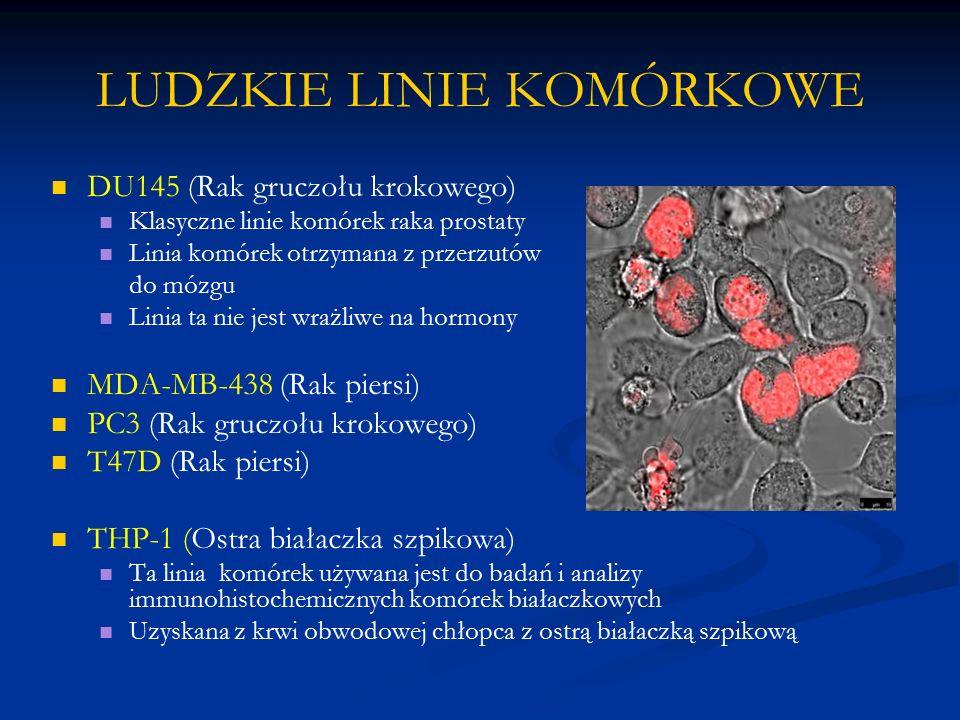 LUDZKIE LINIE KOMÓRKOWE DU145 (Rak gruczołu krokowego) Klasyczne linie komórek raka prostaty Linia komórek otrzymana z przerzutów do mózgu Linia ta ni