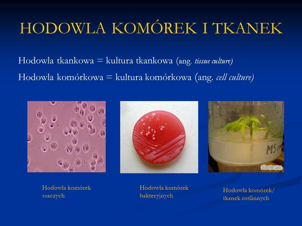 HODOWLA KOMÓREK I TKANEK Hodowla tkankowa = kultura tkankowa ( ang. tissue culture) Hodowla komórkowa = kultura komórkowa ( ang. cell culture) Hodowla