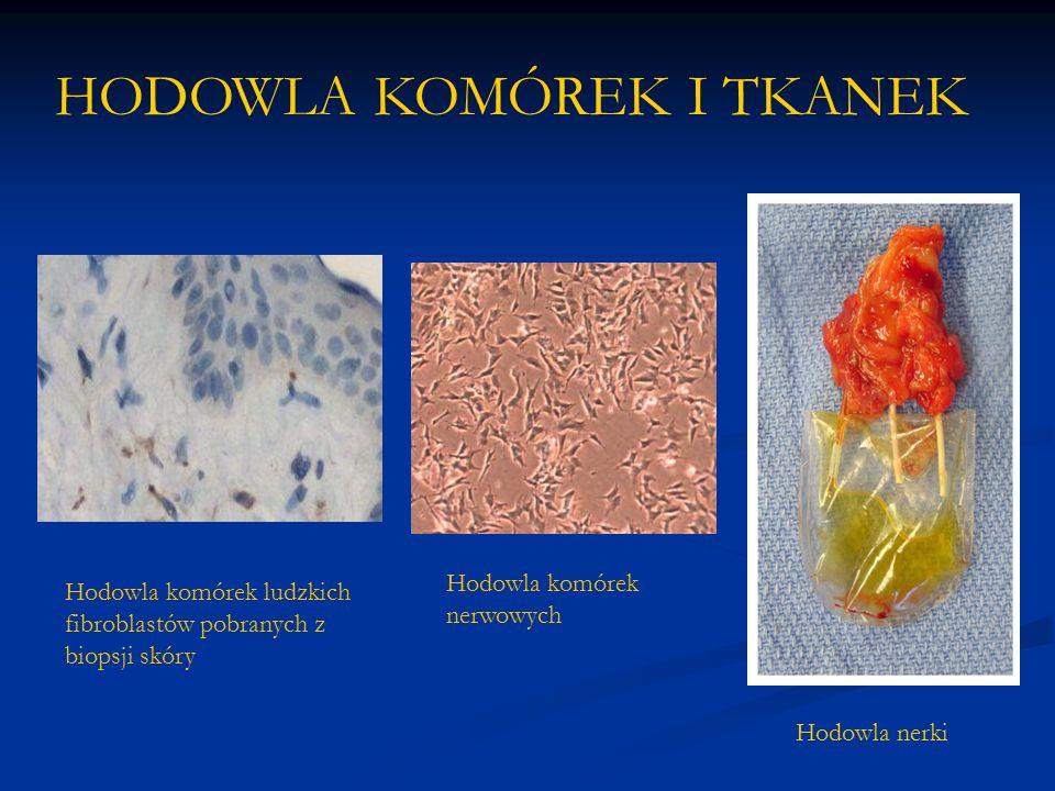 HODOWLA KOMÓREK I TKANEK Hodowla komórek ludzkich fibroblastów pobranych z biopsji skóry Hodowla komórek nerwowych Hodowla nerki