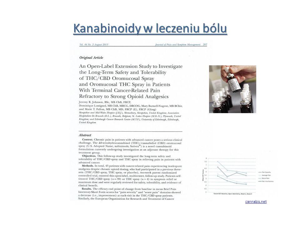 Kanabinoidy w leczeniu bólu cannabis.net