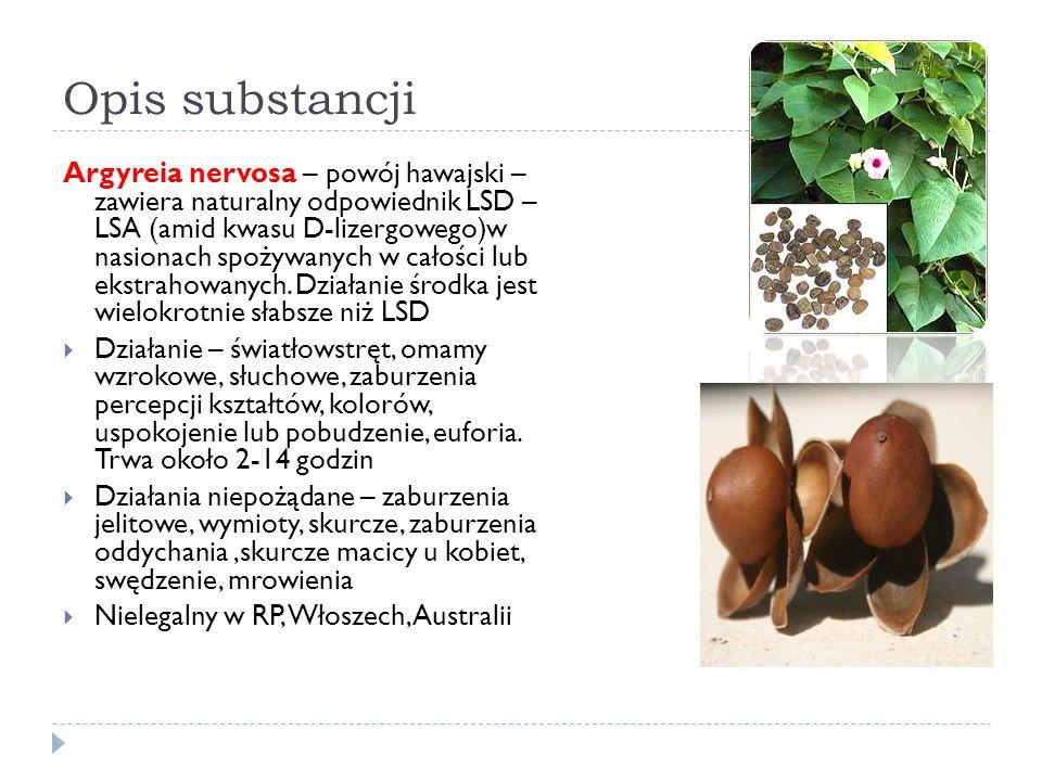 Opis substancji Argyreia nervosa – powój hawajski – zawiera naturalny odpowiednik LSD – LSA (amid kwasu D-lizergowego)w nasionach spożywanych w całości lub ekstrahowanych.